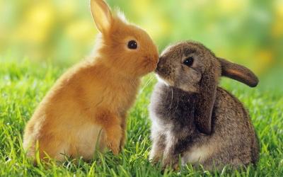 Par de conejos