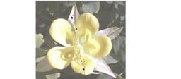 symmetrien til en blomst