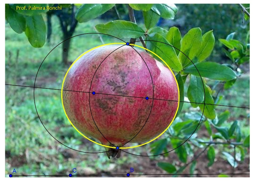 Maths in the nature: ellipse and pomenegrate