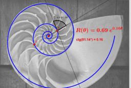 Concha de Nautilus y espiral logarítmica, pero no áurea