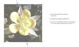 Undersøkelse av symmetri til en blomst