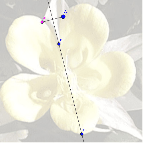 Use point A to trace the outside edges of the flower.  What do you notice about the paths of points A and A'? Press Enter to start activity