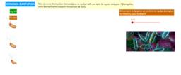 Βακτήρια - Γεωμετρική πρόοδος