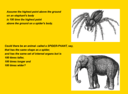 The Spider & The Elephant