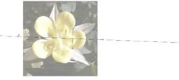 Symmetri i en blomst