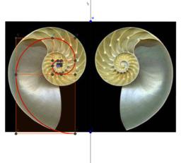 Nautilus1