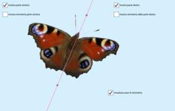 Simmetria di una farfalla (Inachis io)