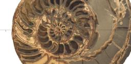 Spirale de l'ammonite