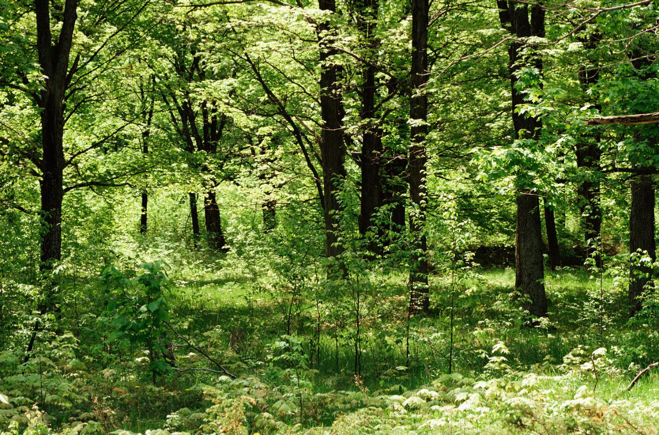 экосистема леса фото что видит