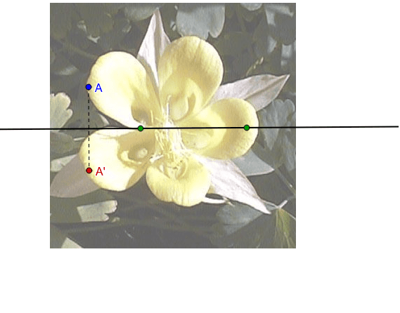 Does this flower have symmetry across the horizontal line? Press Enter to start activity