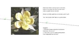 Symmetri av blomst.