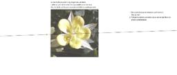 Symmetri, blomst
