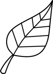 cimbora
