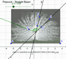 Peacock - Straight Beam - Mara