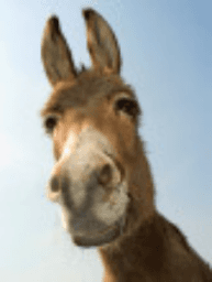 """The """"Donkey Theorem"""", making an ASS of you"""