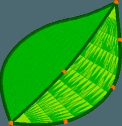 Superficie de Hojas y árboles con GeoGebra