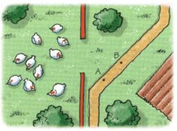 Kopie van Waar zie je hoeveel kippen?