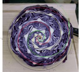 Spirale du chou