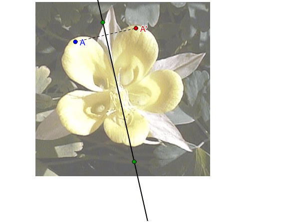 Does this flower have symmetry across the diagonal line? Press Enter to start activity