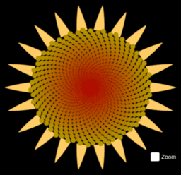 Sunflower with zoom