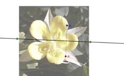 Ricerca degli assi di simmetria