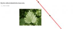 Leaf Line of Reflection Symmetry