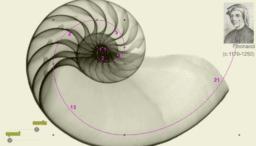 Spirala Fibonacciego Amonit