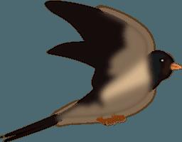 de kleinste vogel